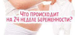 Что происходит на 24 неделе беременности?