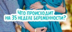 Что происходит на 35 неделе беременности?