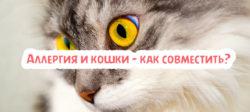 Аллергия и кошки – как совместить?